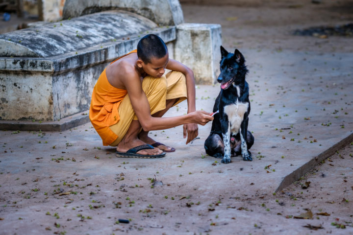 The Grooming - Monk cleaning a dog with a toothbrush, Siem Reap, Cambodia, 2018